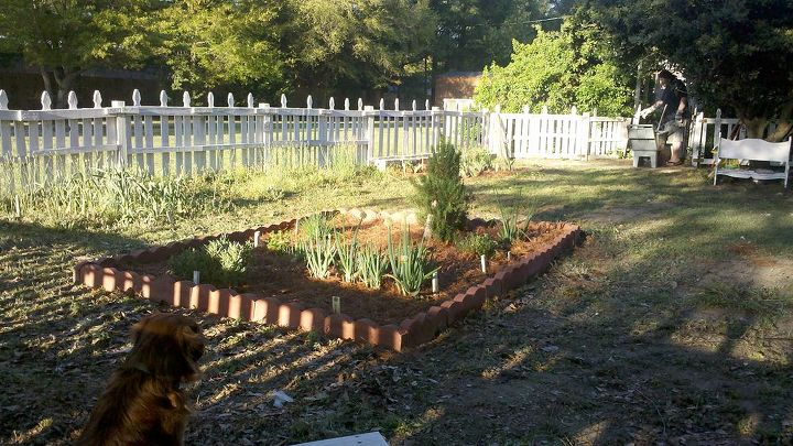 Here is a picture taken from my bench at the back of the garden looking towards the arbor.  The fence is complete.  Now on to making the garden look pretty.  This will take awhile.