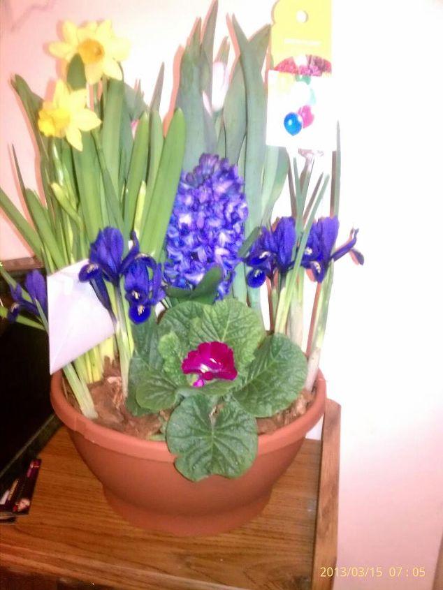 birthday flowers, flowers, gardening