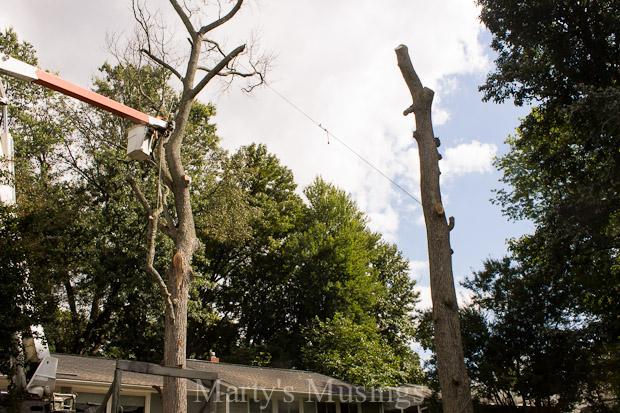 tree removal part one of our dream deck, decks, diy, landscape