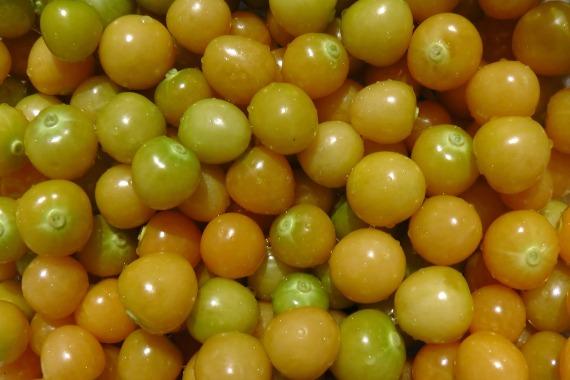 how to grow ground cherries, gardening