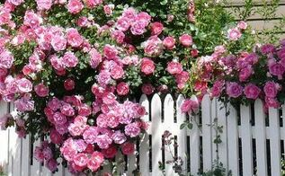 the 10 biggest mistakes people make when pruning roses, gardening, landscape, Bontiful Rose Bush viaSummers at the Cottage