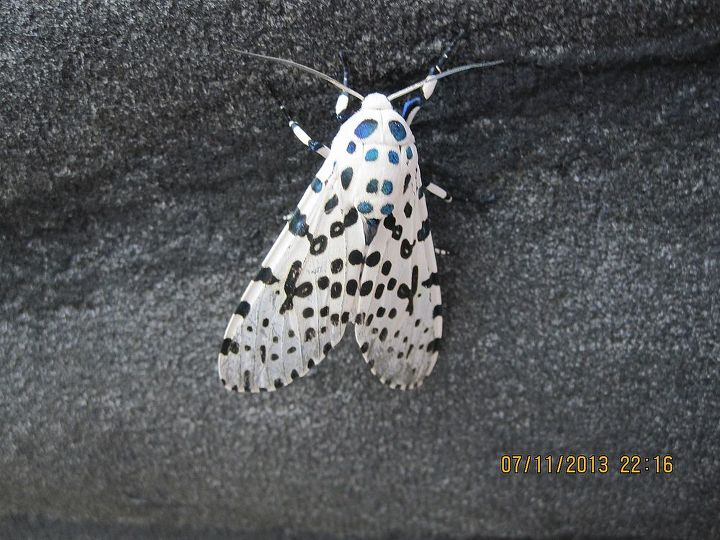 back view of butterfly