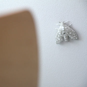 Don't squish it! That moth is a smoke detector best suited for a budding entomologist.