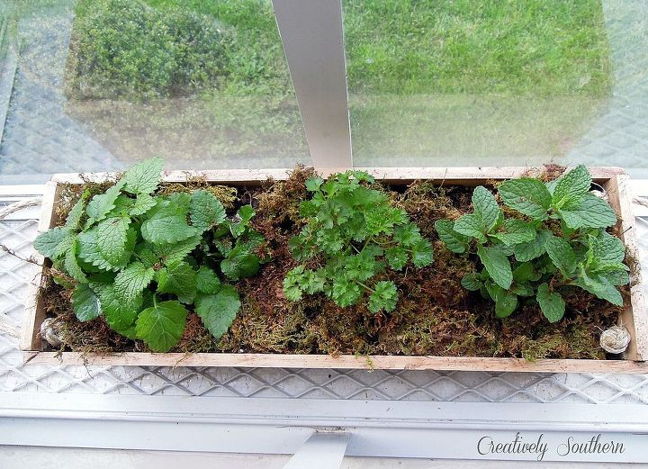 Find a sunny location for your herbs to grow!