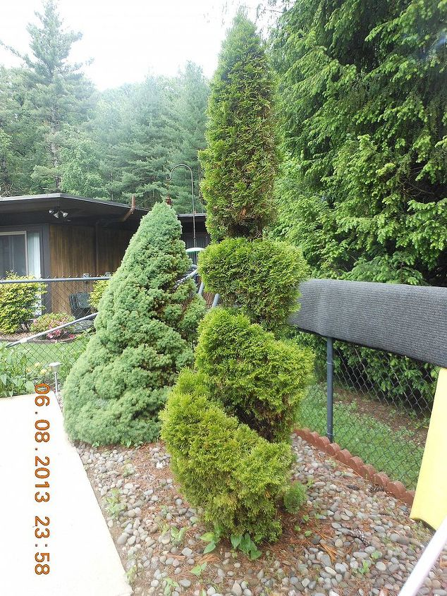 what is the best technique to trim an arborvitae, gardening, landscape