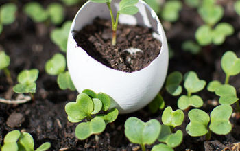 what to do with the leftover eggshells eggshell seedling pots, gardening, repurposing upcycling