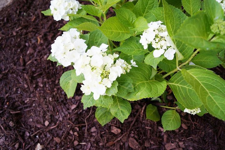 cleaning out the flower bed, cleaning tips