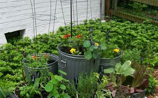 galvanized garden repurposed container planting, container gardening, gardening, repurposing upcycling, Reuse old trashcans buckets tubs make them into a kitchen garden