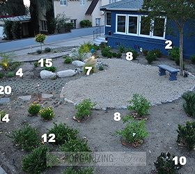 Superior Native Drought Tolerant Plants For Your Yard, Gardening, Landscape