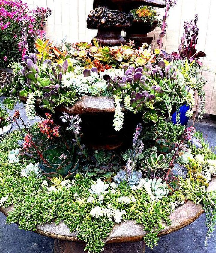 more succulent talk, flowers, gardening, succulents