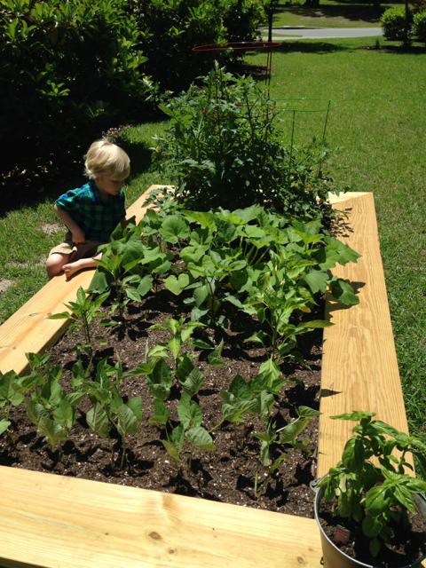 diy raised vegetable garden, gardening