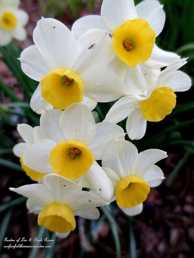 Tiny Narcissus