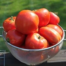 how to grow amazing tomatoes this year, gardening, Whether fresh or canned we use tomatoes from our garden nearly every day of the year