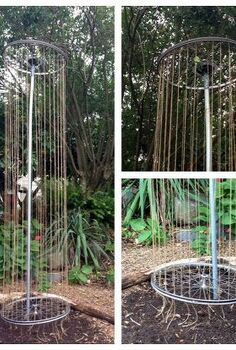 bicycle wheel trellis, gardening, repurposing upcycling, A great idea for growing peas in a compact space The project looks fairly simple as well