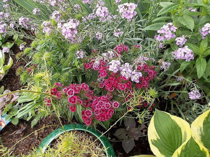 this year s flowers 2013, flowers, gardening, hibiscus