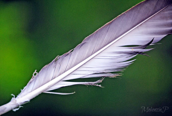 """This one is titled """"Crow's Feather""""."""
