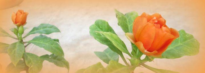 garden, flowers, gardening