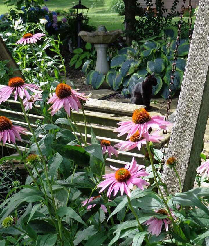 in my garden, gardening