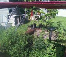 updated garden shots taken 7 9, gardening