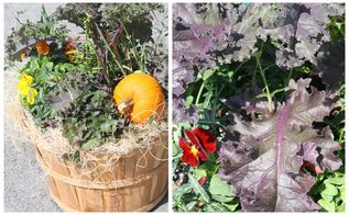fall planters and gardening tips, container gardening, gardening, seasonal holiday d cor, Add small pumpkins and gourds to your containers