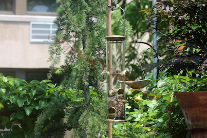 """My WBUSS Feeder with supported by my """"genius"""" pole idea! (Referred to as Photo-Five in post.)"""