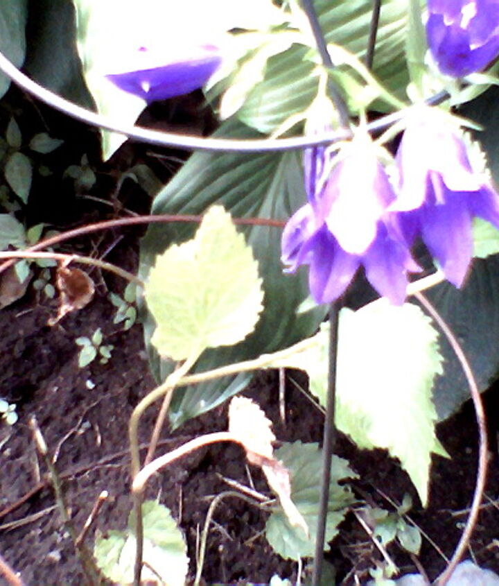some pic s from my street side garden, gardening