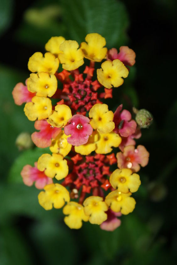 Lantana's....grow best in sun.....great heat & drought tolerance!