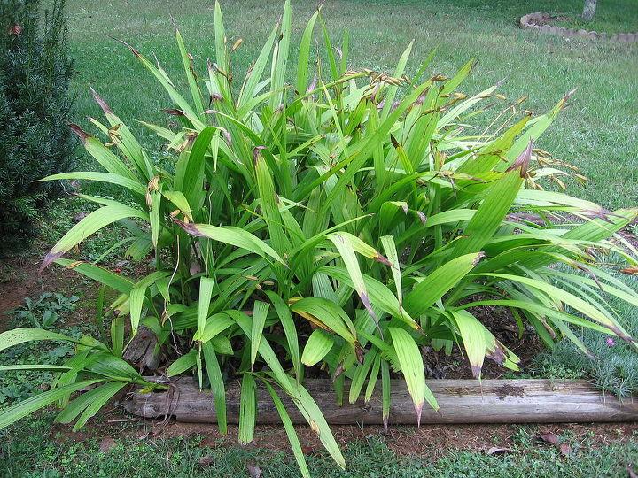need help identifying this plant, gardening
