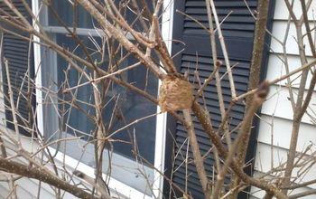 My Valentine Surprise~ a Mantis nest!