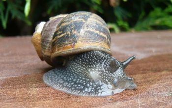 Eco Ideas How to Get Rid of Snails and Slugs