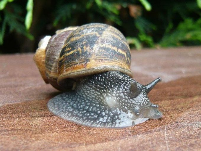 eco ideas how to get rid of snails and slugs, go green, pest control