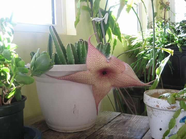 can anyone know what type name of catcus, gardening