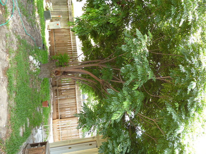 what kind of tree is this, gardening, Sorry it s sideways but it s an old and rather small tree