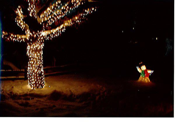 Oak tree in front yard-that I strung the lights up by myself in the night-and before a storm! Christmas of 2009