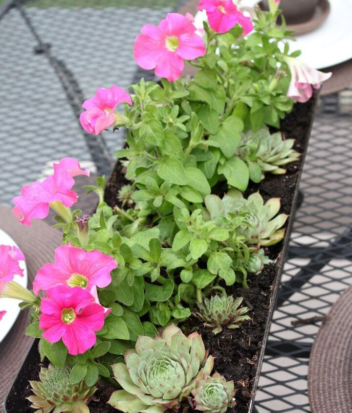 Window box full of petunias & succulents serve as a centerpiece.