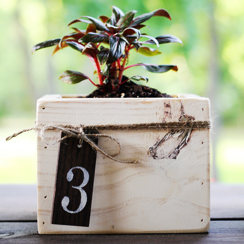 diy mini planterboxes as a centerpiece, gardening, outdoor living, DIY Planter Box