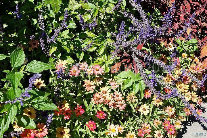 Seasonal plantings in the English garden.