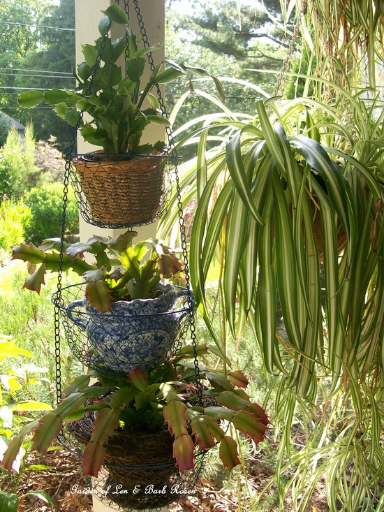 3 tiered hanging veggie holder shows off houseplants on summer vacation