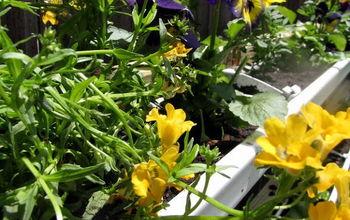 DIY Gutter Garden