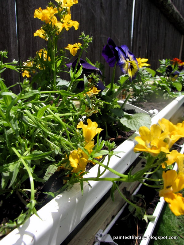 diy gutter garden, fences, flowers, gardening, repurposing upcycling