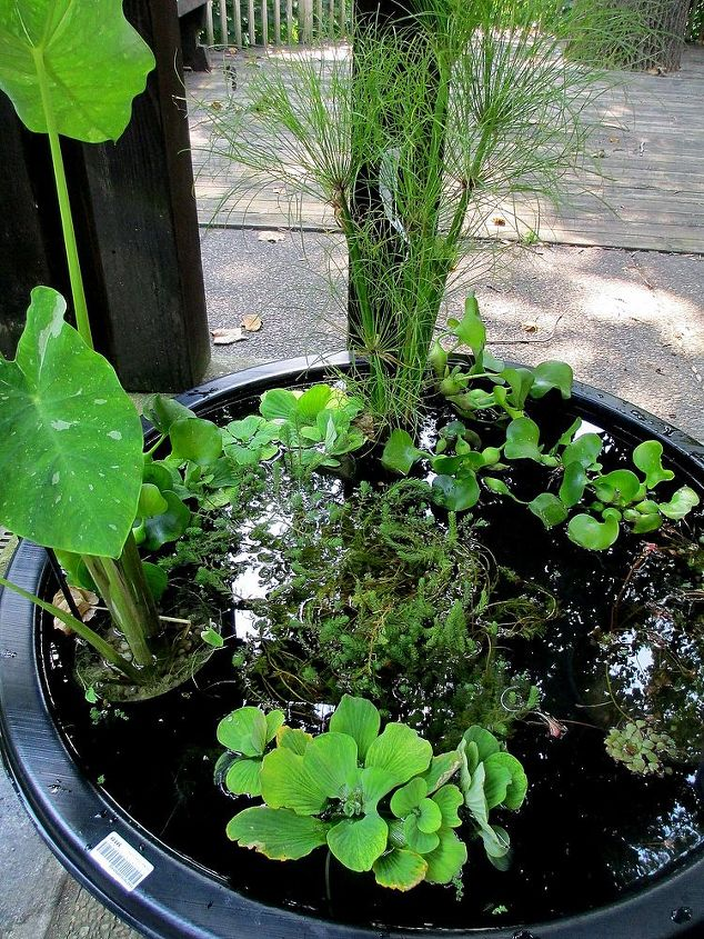 Fill the pot, add the plants and you have an instant water garden!