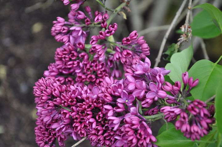 spring might be my favorite time of the year especially at lilac time, gardening