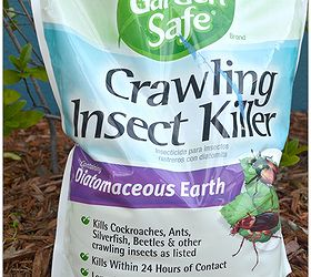 To Earth Grade Food Diatomaceous Buy Lowes Where
