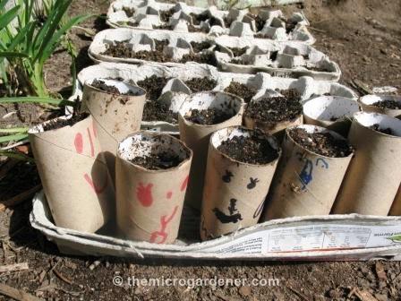 Toilet roll & egg carton seed raisers