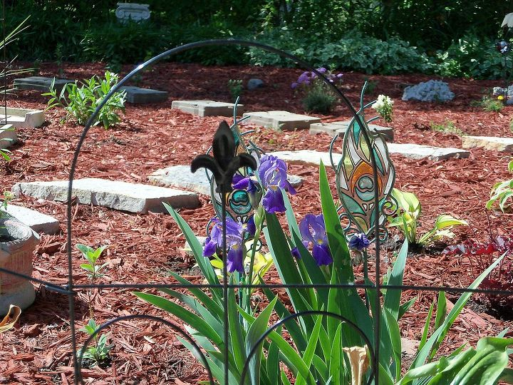 Irises blooming near entrance now