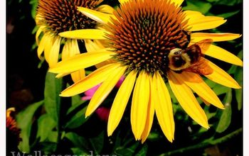 Favorite Bee Pollinator Plants for Summer