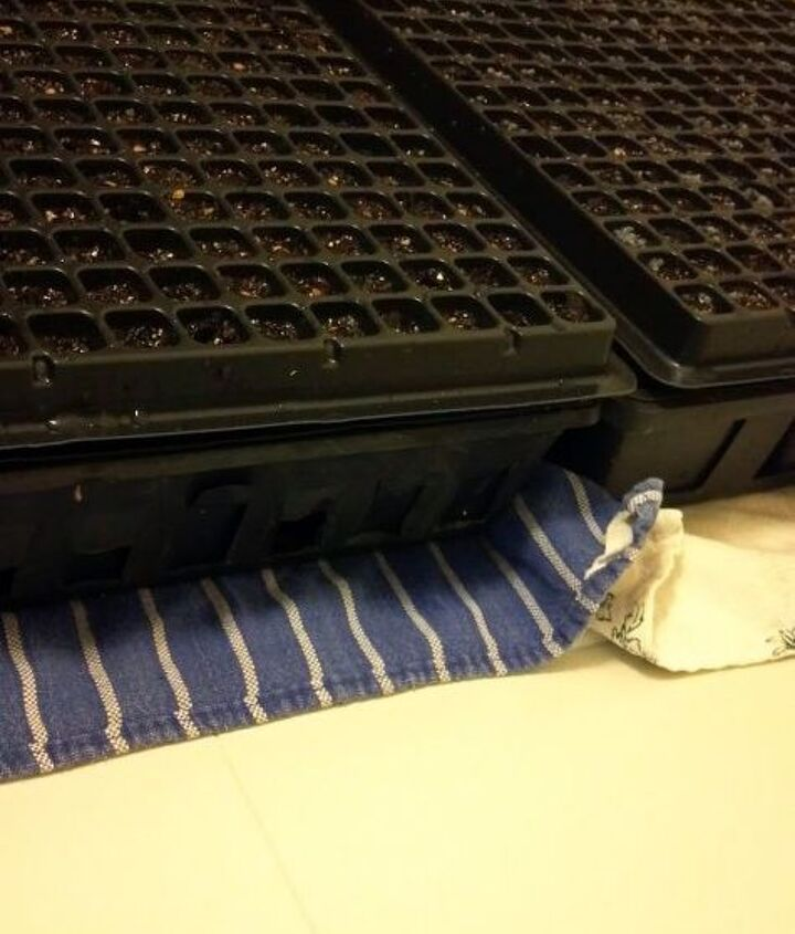 Pros have a specail heating pad for seeds, but you can heat them from the bottom by putting them on the dryer.