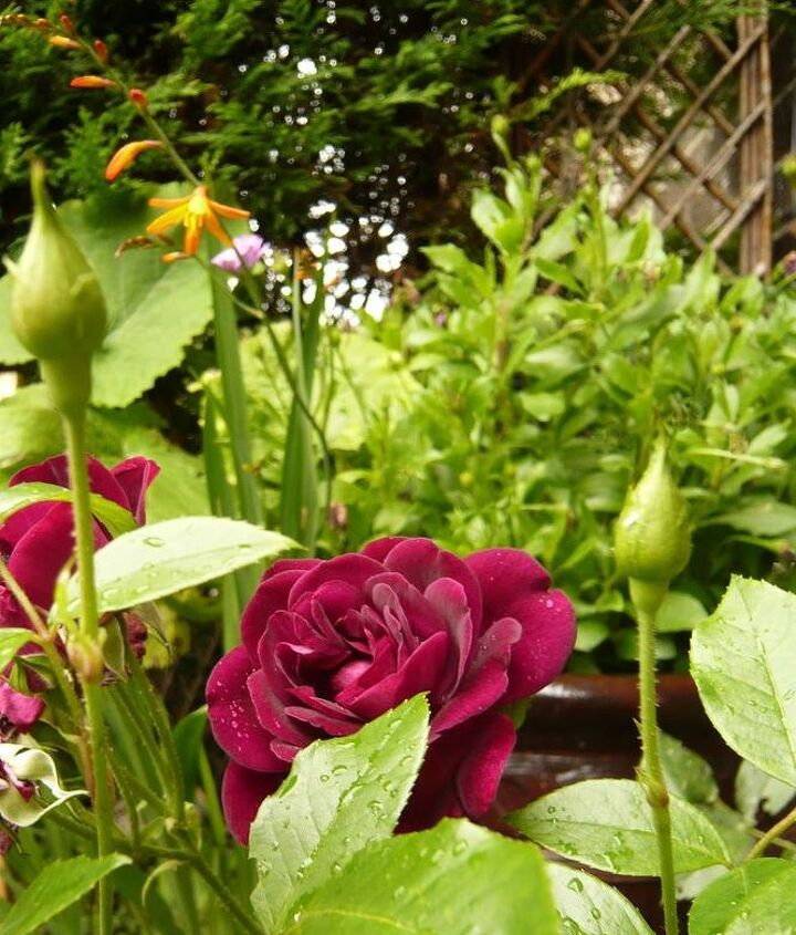 helpful tips home and garden, cleaning tips, flowers, gardening