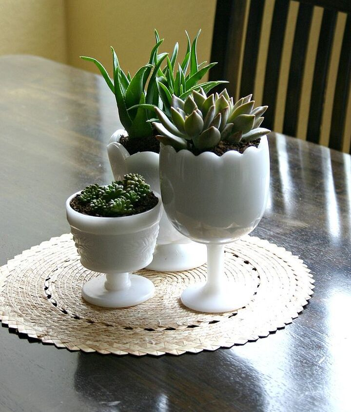 succulents in thrifted milk glass, flowers, gardening, home decor, repurposing upcycling, succulents