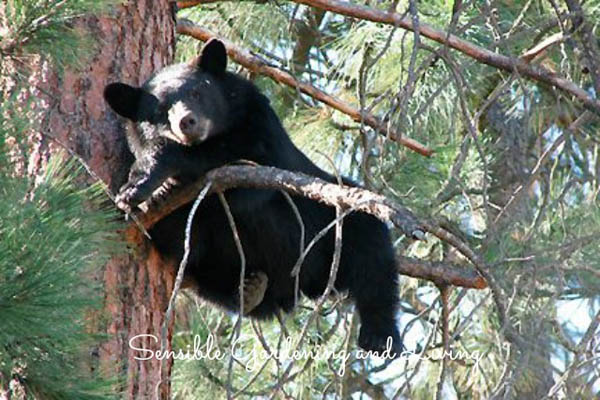 Enterainment? How about a bear in a tree? http://sensiblegardening.com/gardening-with-bears/